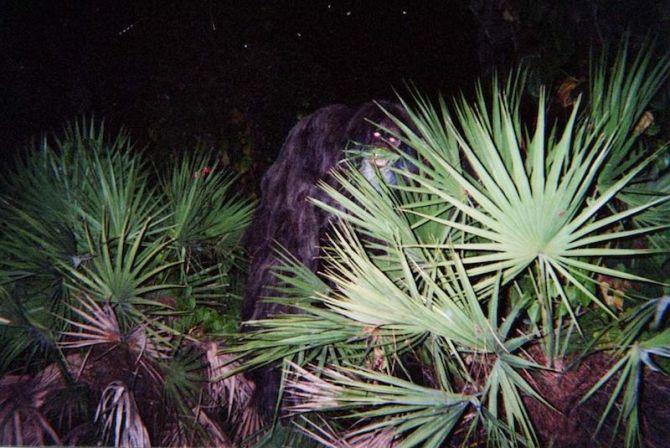 skunkrangutan